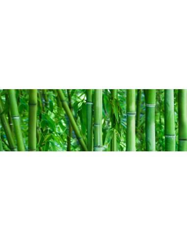 Bambo glass inserto A I B 25x75 Rect...